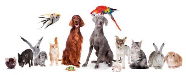 Love A-Lot Pets