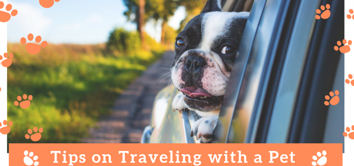 Tips on Traveling with a pet