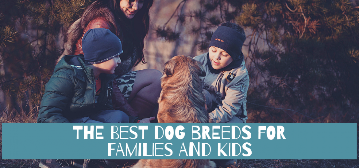 Best Dog Breeds for Families and Kids