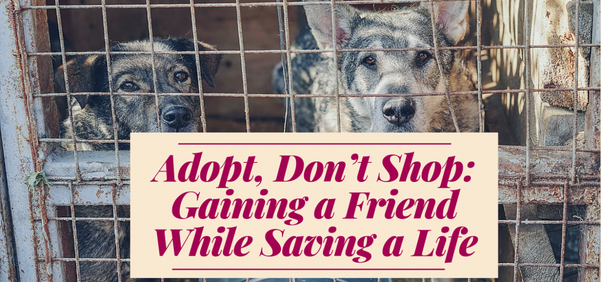 Adopt, Don't Shop: Gaining a Friend While Saving a Life