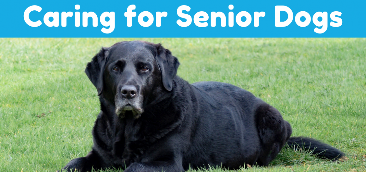Tips for Caring for Senior Dogs