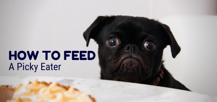 How to feed your picky dog eater