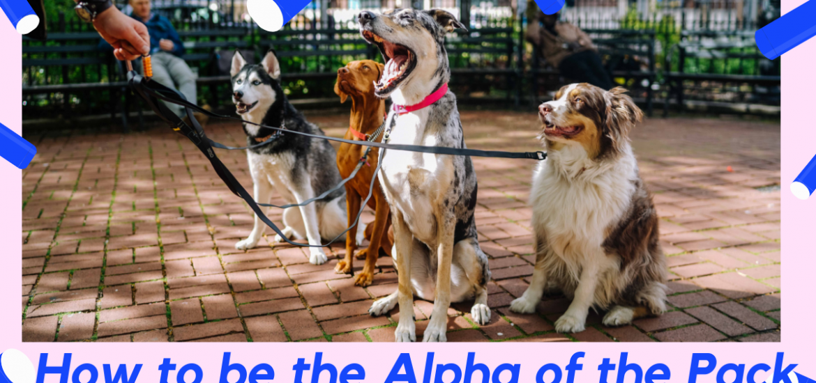 How to be the alph of the pack