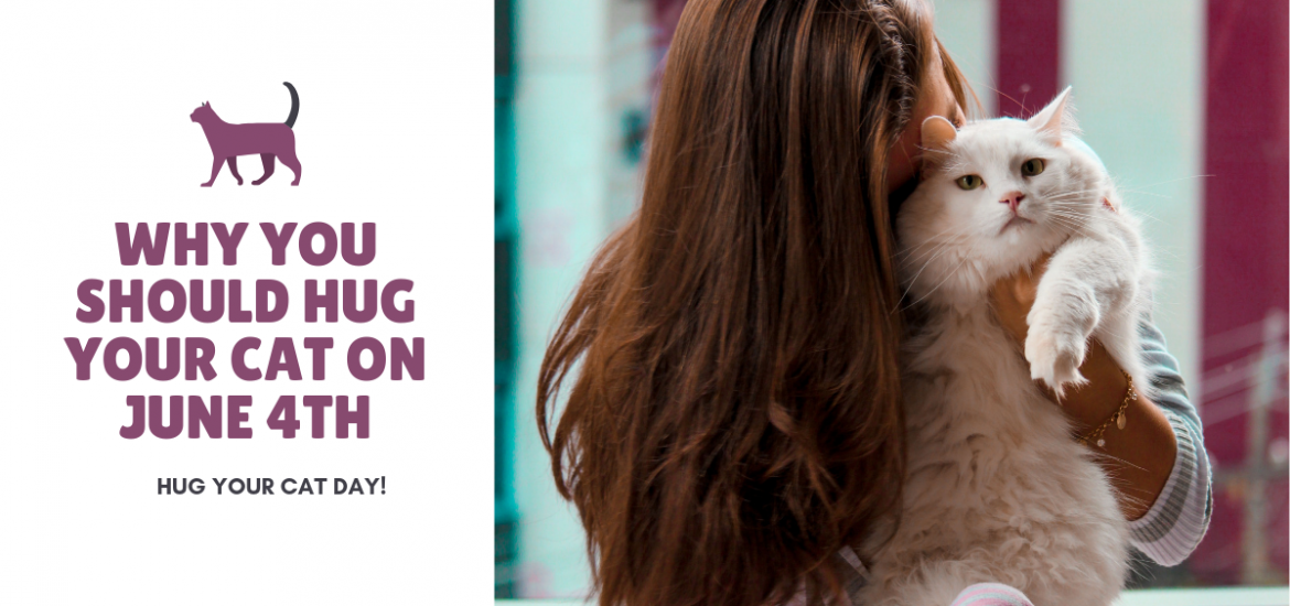 Why you should hug your cat on June 4th