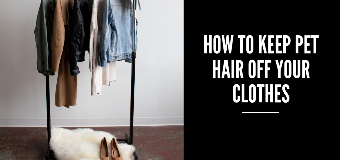 How to keep pet hair off your clothes