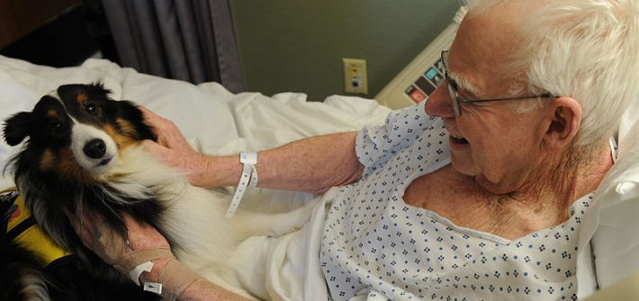 therapy dog for seniors