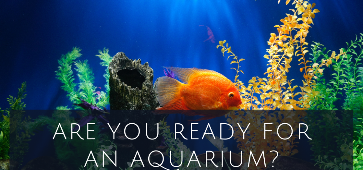 Are you ready for an aquarium?