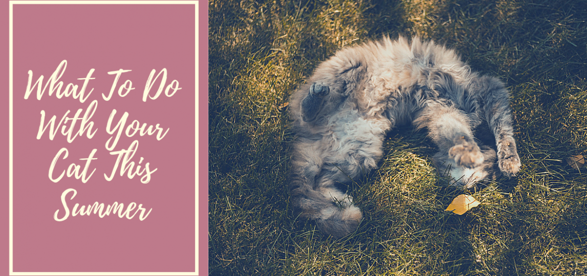 What to do with your cat this summer