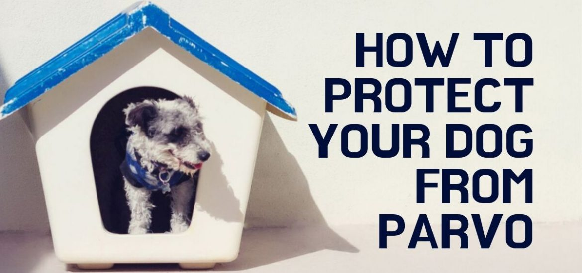 how to prevent parvo
