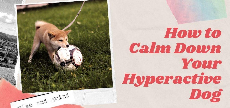 calm hyperactive dog