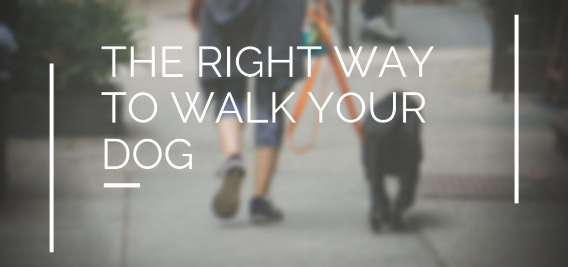 walk your dog tips