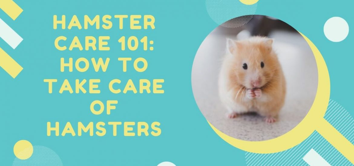 How to Take Care of Hamsters