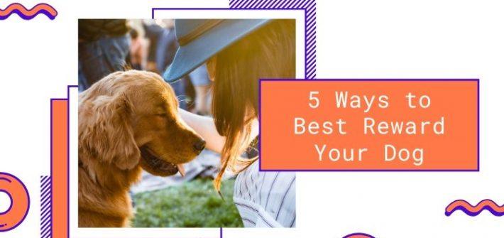 best ways to reward your dog