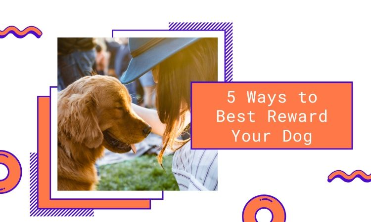 best ways to reward your dog