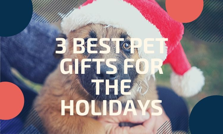 Best Pet Gifts