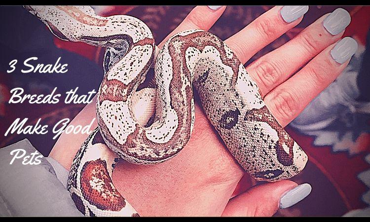 snake breed