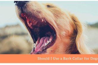 Bark Collar for Dogs