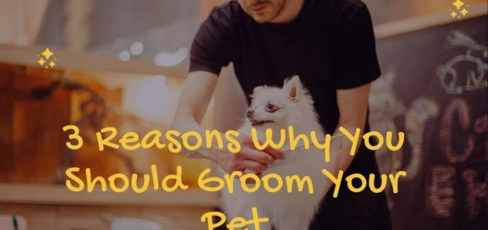Groom Your Pet