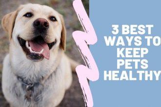 keep pets healthy