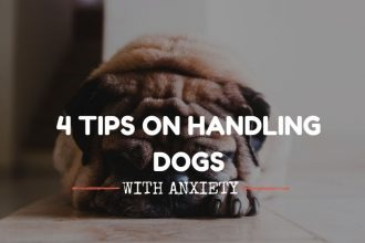 dogs with anxiety