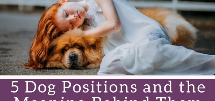 dog positions