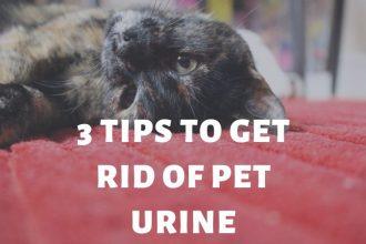 pet urine